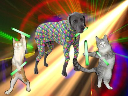 Rave_cats_2